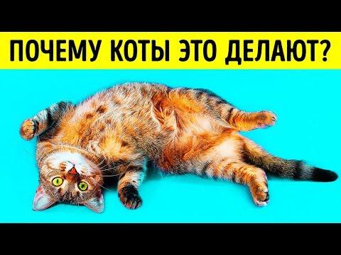 Болит рот у кошки