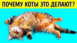 Download Почему кошки ложатся на спину при виде вас Mp3 and Videos
