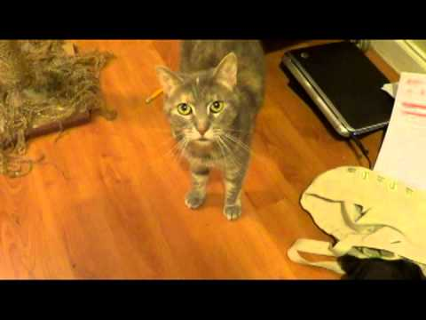 Cute cat video, Feeding Lethean at 1 and 10 years old