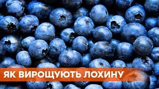 Как заработать в Украине миллион за сезон и что выращивать