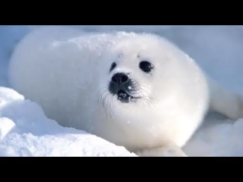 Arctic Adaptions - YouTube