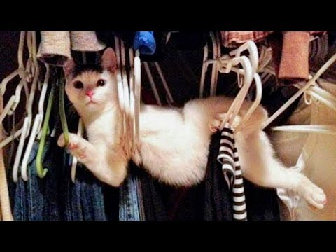 😇 Cutest And 🤣 Funniest 😻 Cats and 🐶 Dogs - Funny Pet Animals' Life