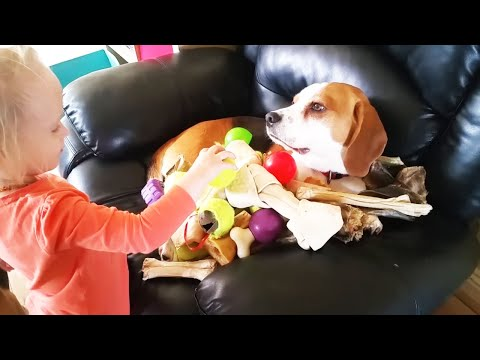 Baby showers patient dog with toys ( Charlie the dog)