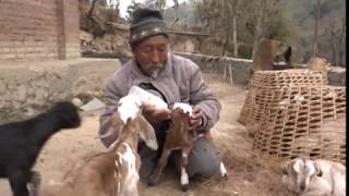 NEPALTODAY_20740328 : Vegetable Farming, Pig Farming, Poultry Farming and Goat Farming