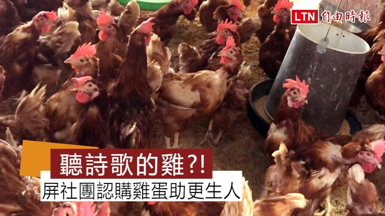 這些雞全天聽詩歌! 屏縣企業社團認購雞蛋助更生人