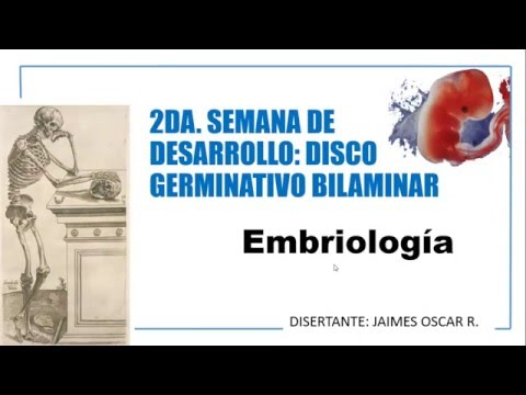Segunda semana de desarrollo embrionario - disco g