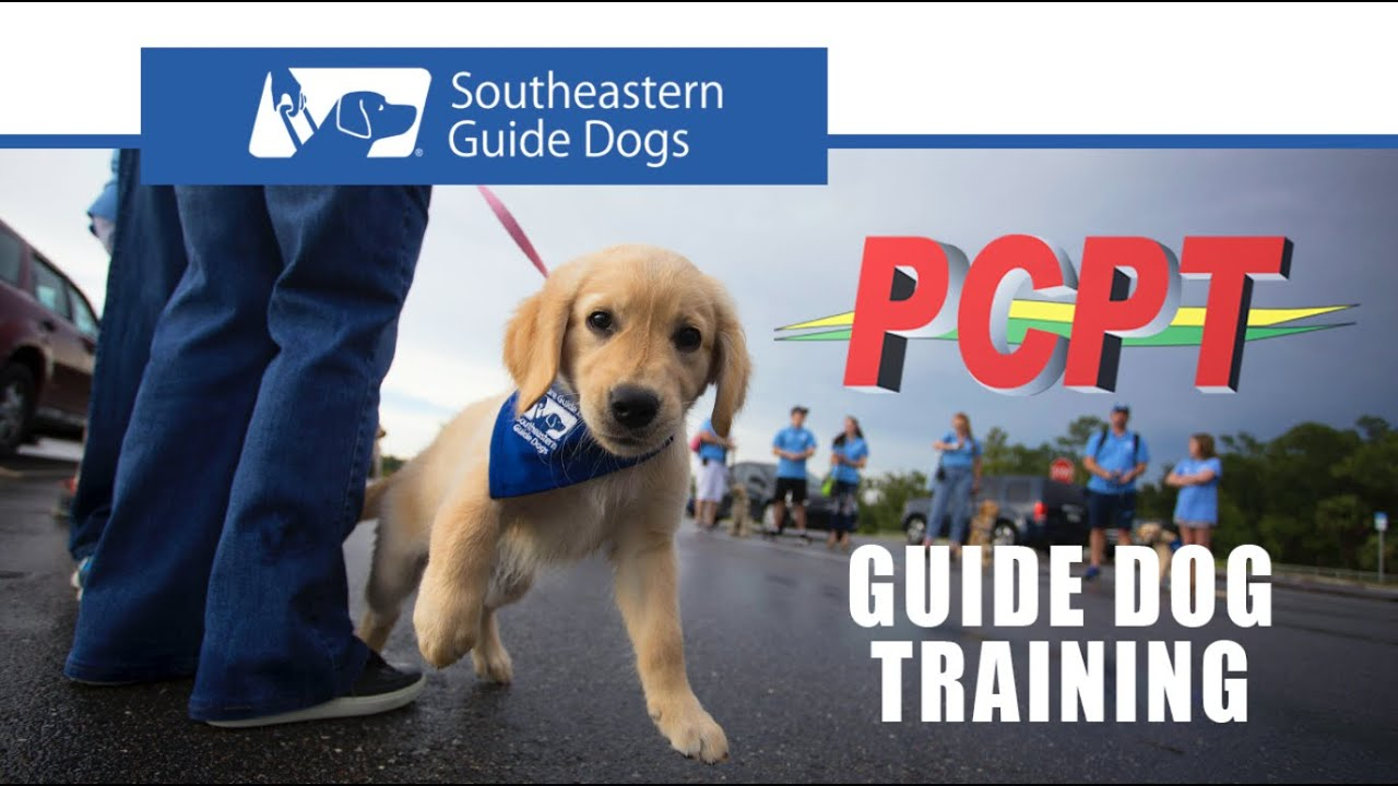 Guide Dog Training with Pasco Public Transportation