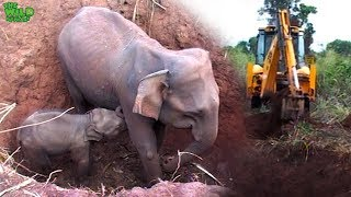 Baby and elephant mother saved from a pit by real life heroes