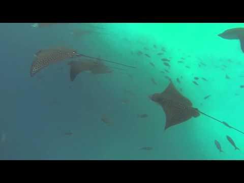 Exploring Galapagos with Contiki