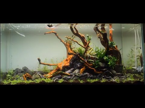 Aquascape ADA 90P - a dream come true -