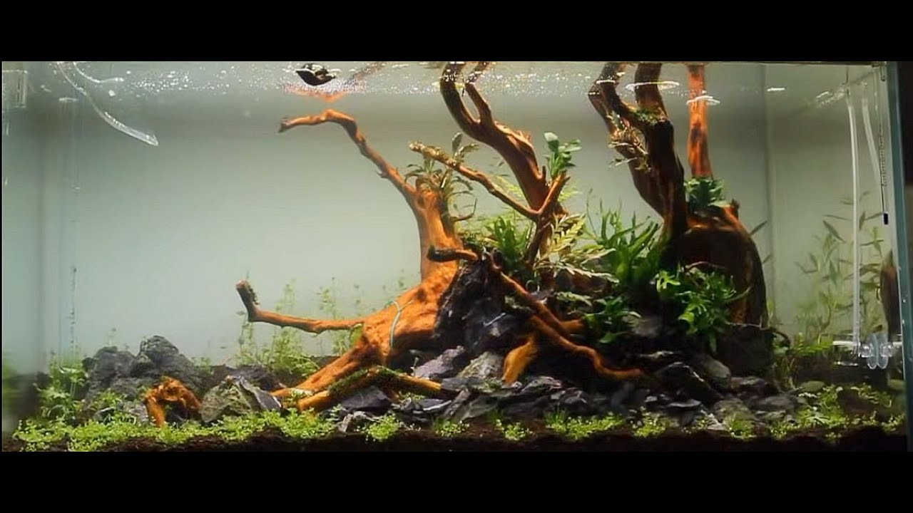Nice Aquascape ADA 90P   A Dream Come True     YouTube