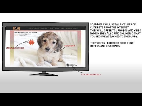 Puppy Scammer List 2019 : reported on Petscams com