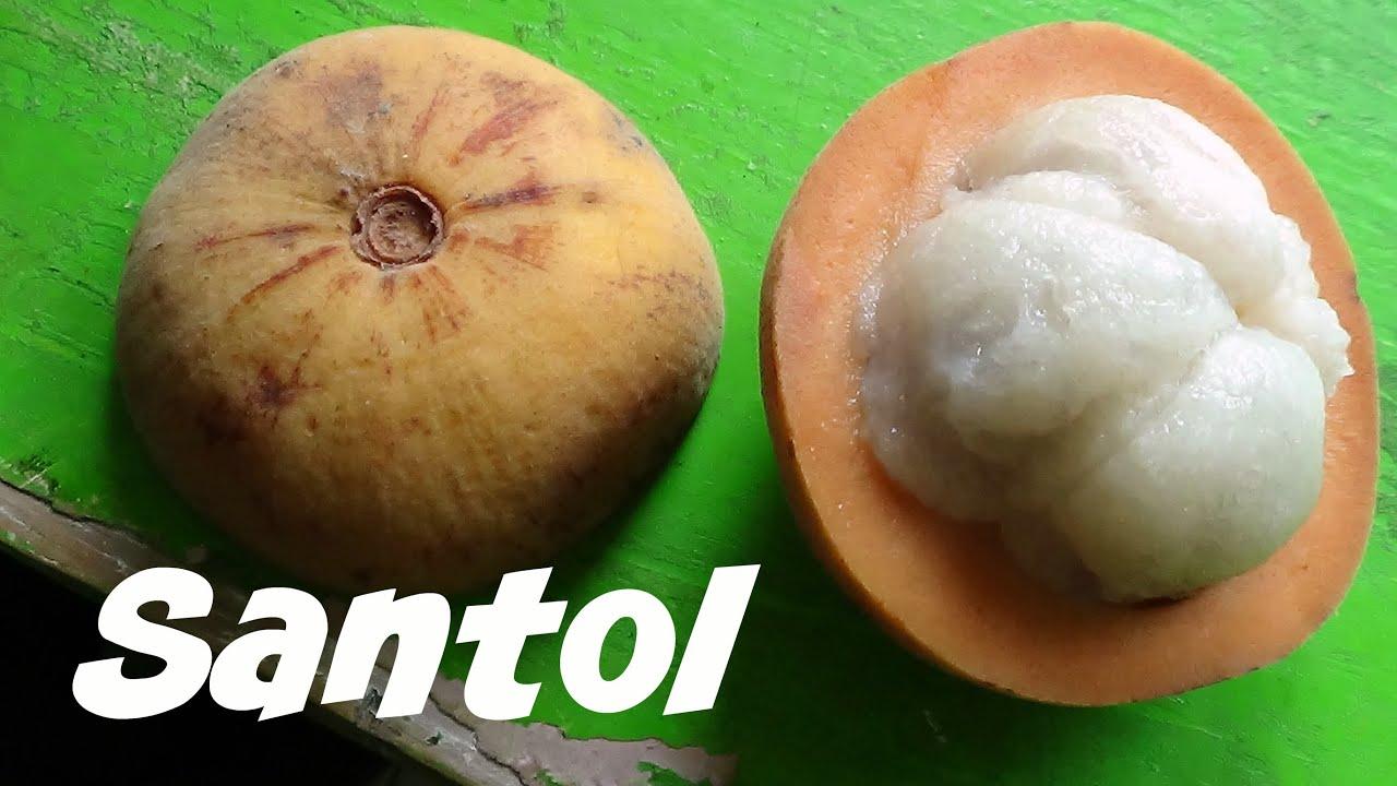 uses of santol