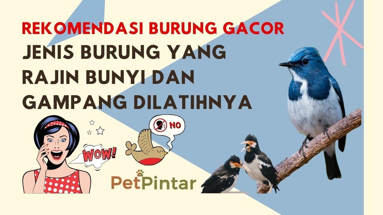 Dijamin Gacor Ini Jenis Burung Yang Rajin Bunyi Suara Merdu Dan Gampang Dilatihnya Youtube