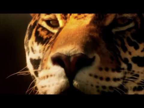 4  Cirque De Soleil  Kumbalawe