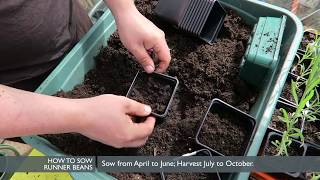 Growing Runner Beans - How to sow | VEGETABLES