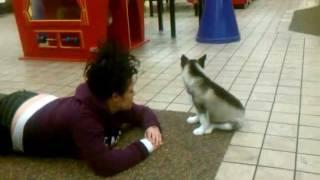 Siberian Husky Attack!