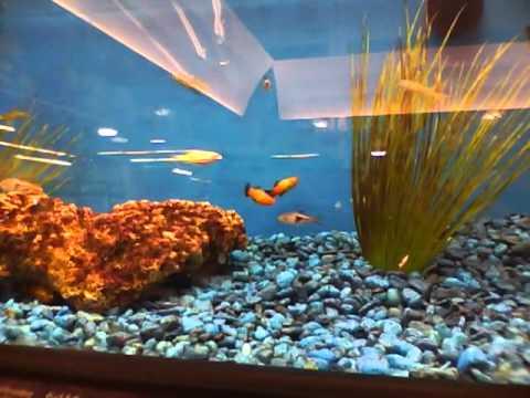 tropical fish, pet store