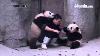 Kelakuan Iseng Anak Panda -NET5