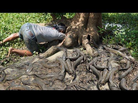 Unbelievable Fishing Underground Secret Hole Wood | Amazing Fishing That Woke 100%