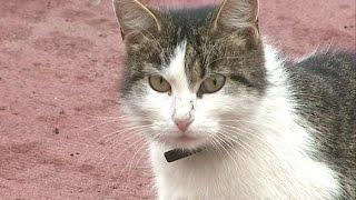 Животные на поле: «Зенит» оштрафован за кошку