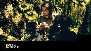 National Geographic | Dian Fossey