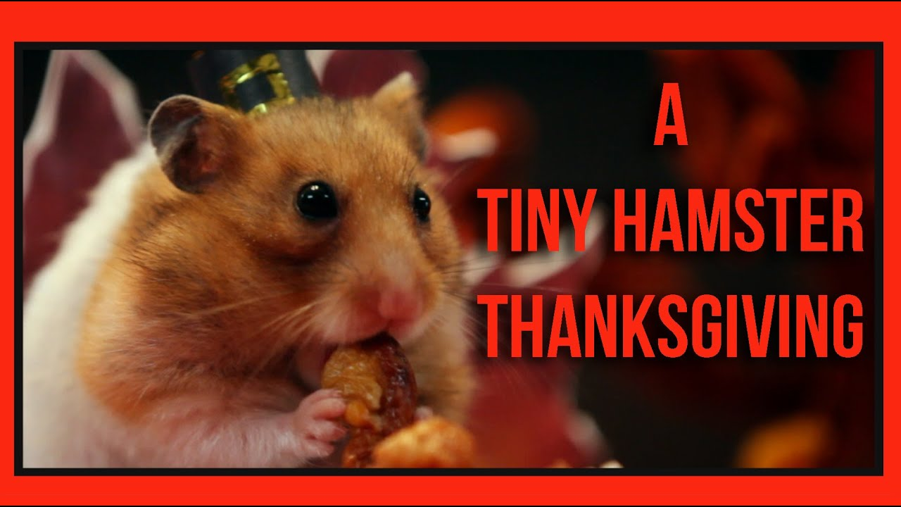 Turkey Wallpaper Cute A Tiny Hamster Thanksgiving Ep 4 Youtube