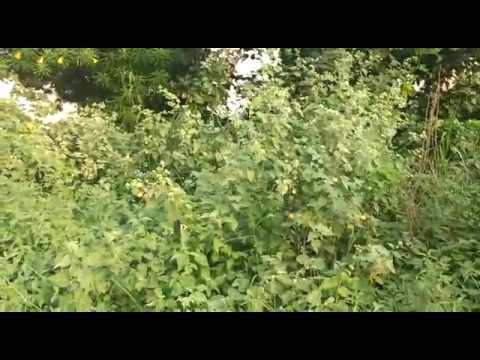 Industrial Land Sale Delhi Road Meerut