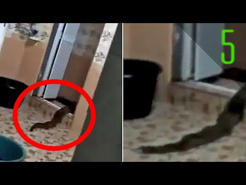 5 Mysterious Unidentified Creatures Found Recently