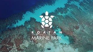 Roatan Marine Park