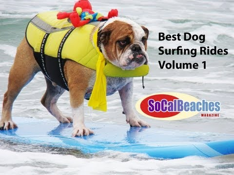 Best All Time Dog Surfing Rides Volume 1 Huntington Beach