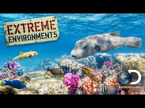 EXTREME ENVIRONMENTS | EP1 | Ocean