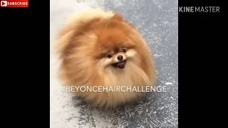 2020 latest SUPPER funny videos TOP 10 VIRAL FUNNIEST VIDEO IN THE WORLD