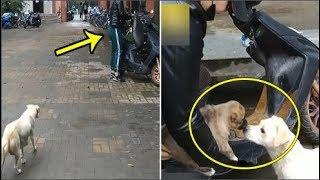 Chủ cho mất con, chó mẹ đuổi theo hôn tạm biệt khiến ai nấy chứng kiến cũng rưng rưng nước mắt