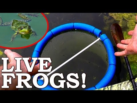 Feeding LIVE FROGS To POND FISH! | Trapping And Stocking My Pond With MINNOWS