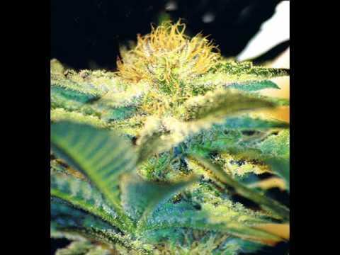 Filo - I get high