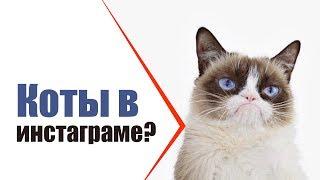 Миллион подписчиков у кота???!!! Знаменитые кошки интернета | Коты популярные в Инстаграм