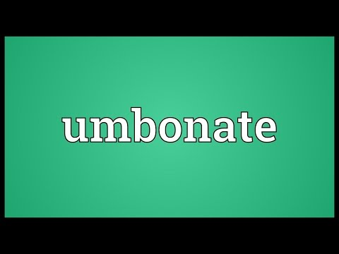 Header of umbonate
