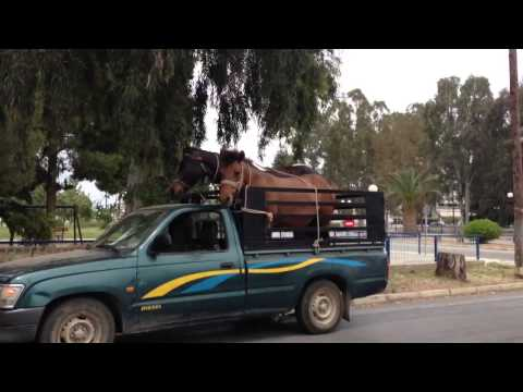 Αλογα προς πώληση