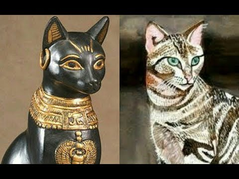 DNA study reveals cats originated in ancient Egypt and travelled the wor...