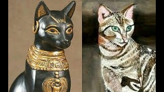 DNA study reveals cats originated in ancient Egypt and travelled the world with their owners thumbnail