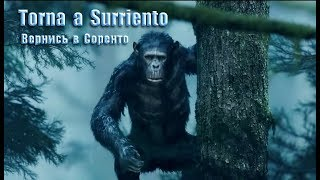 ,,Torna a Surriento,, - вокал - А. Ренуар - 2019 г