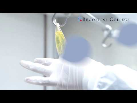 Brookline College - What Does A Pharmacy Tech Do?