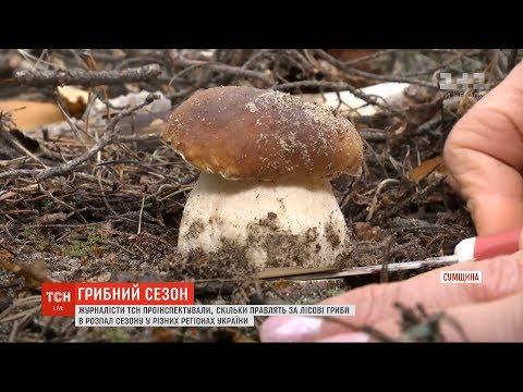 Де вродили гриби