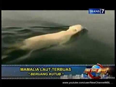 On The Spot Trans 7 - 7 Binatang Laut Yang Paling Buas Di Semesta