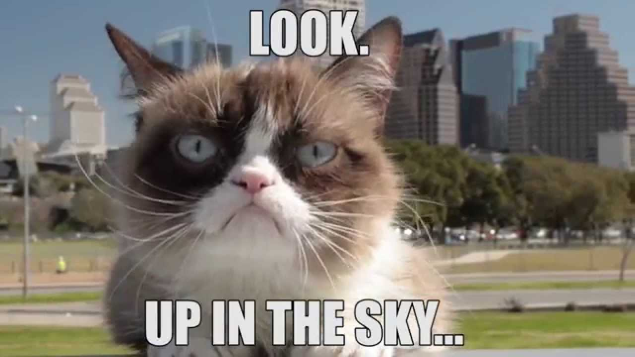 Grumpy Cat In The Sky YouTube - 17 pictures that prove cats really dont give a damn