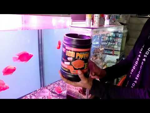 Best Fish Food Super Red Parrot Fish Food..blood Red Parrot Fish