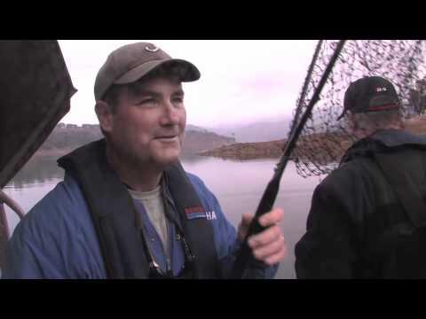 Lake Berryessa Trout