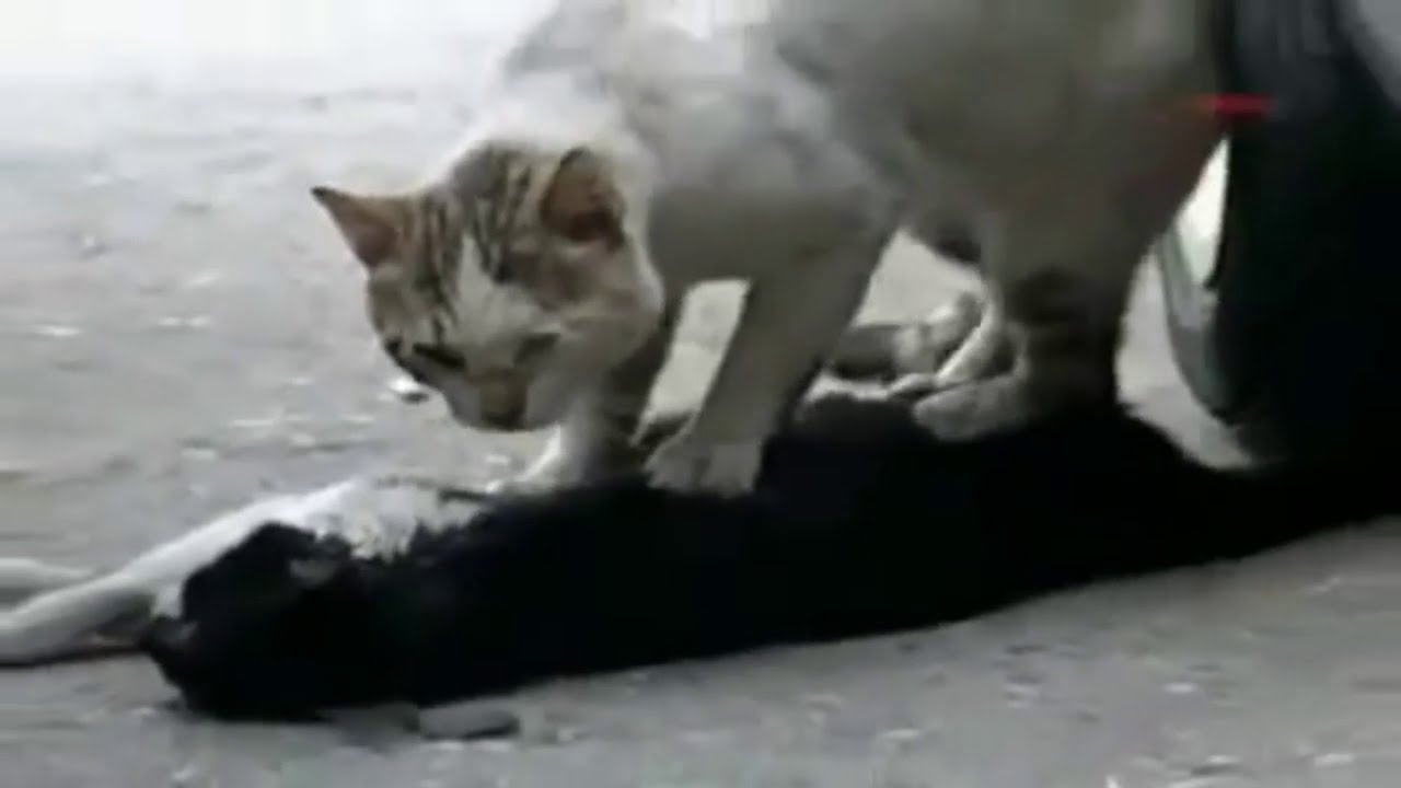 animals helping each other - photo #17