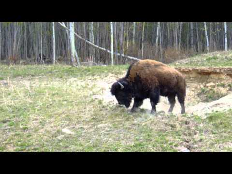 Erlebe Kanada - Teil 2 (2010)